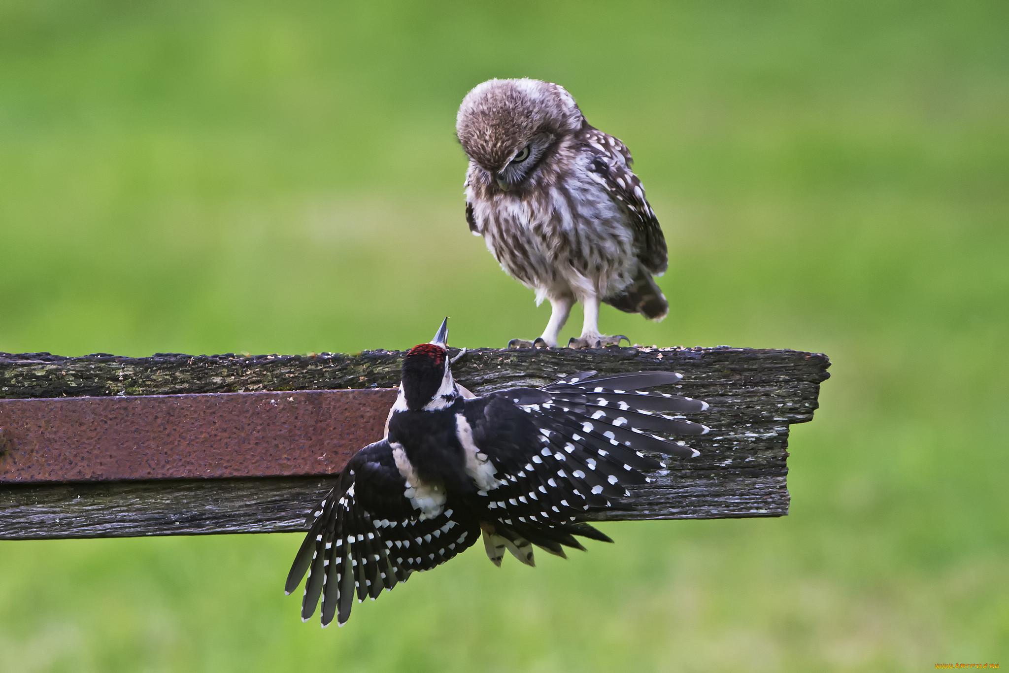 птицелов животное фото глину человек